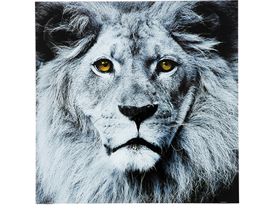 home-decor/wall-decor/kare-lion-face-picture-glass-80x80cm